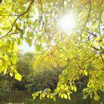 真の自己ってなんだろう。 森と魂のセラピスト 飯田みゆきコラム No.1