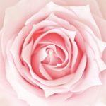 アセンション 女神の時代がやってくる cosmic connectのブログ vol.64