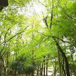 『あなたは完成された光の存在です。』 森と魂のセラピスト 飯田みゆきコラム No.4
