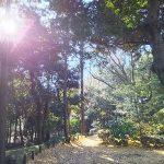「幸せになる力のヒミツ、それは筋トレ。」森と魂のセラピスト 飯田みゆきコラム No.10