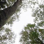 「幸せになるヒント~地球上で愛と光を表現する目的を信頼する。」森と魂のセラピスト 飯田みゆきコラム No.11