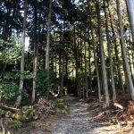 八百万(ヤオヨロズ)「まんぷく」ロケ地で迷子! 滋賀・日吉大社 東宮 奥宮
