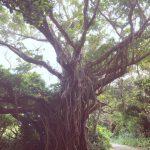八百万(ヤオヨロズ) 神の島 祈りの島  御嶽で聴いた聖なる音色  沖縄・久高島 Vol.3