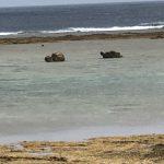 八百万(ヤオヨロズ) 神の島 祈りの島 肉体をもって死ぬということ 沖縄・久高島 Vol.2