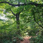 ジブリ映画「もののけ姫」の舞台!世界自然遺産 白神山地で精霊たちと遊ぶ