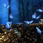 龍が転生した綺麗な男の子 黒い蝶を纏いアストラル界で出会った!