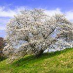 【奈良】3月11日 🌸 宇宙神子❗️ 地球でライトワークする⭐️⭐️ 日本最古の道でレイライン(Hikari(コズミック・ハート・エナジー))をつなぐ💫