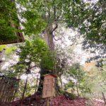 【祈り】わたしたちはどの次元を歩いていたのだろう? スサノオ神の御魂を祀る 須佐神社・島根