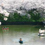 【東京】3月20日 🌸 宇宙神子❗️ 地球でライトワーク⭐️⭐️ 春分の日のレイライン(Hikari(コズミック・ハート・エナジー))をつなぐ💫