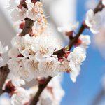 【満席】【東京】2月3日 立春 愛と叡智のフォースともにあれ!  瞑想練習  ⛩宇宙と 地球と 魂と 自分とつながる Hikari(コズミック・ハート・エナジー))でつながる!